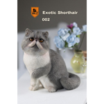 Exotic Shorthair Cat (Grey)