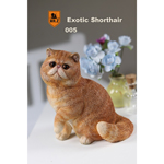 Exotic Shorthair Cat (Brown)