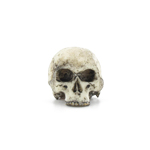 Headsculpt white skull