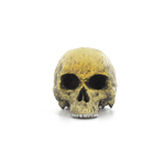 Headsculpt light brown skull