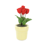 Red tulip in white pot