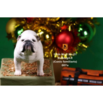 British Bulldog Dogs 4.0 Set (White)