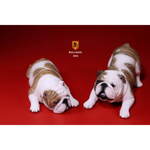British Bulldog Dogs Set (Beige)