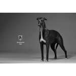 Greyhound Dog (Black)