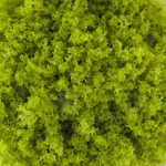 Sprout Green Texture Powder (Green)