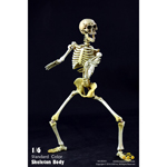 Standard Skeleton Body