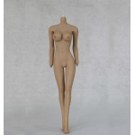 Caucasian Seamless Female Body