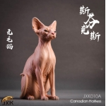 Sphynx Canadian Hairless Cat (Brown)