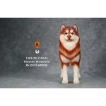 Alaskan Malamute Dog (Orange)